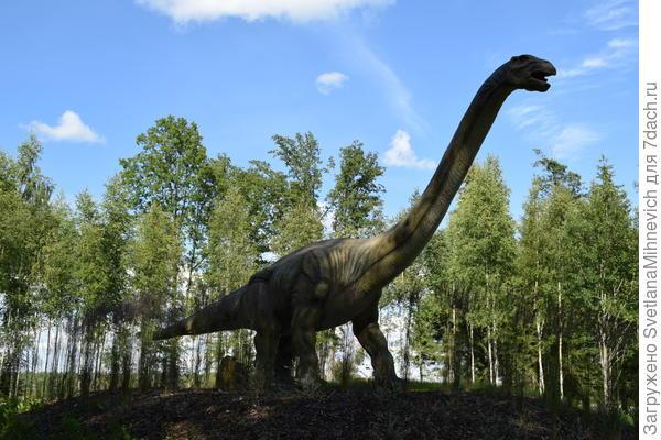 Есть и такие. Около каждого динозавра есть табличка с названием.