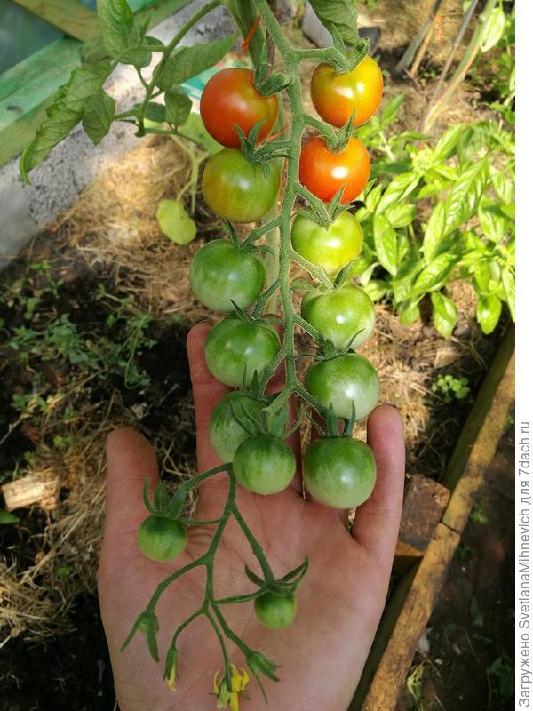 Наслаждение садовода