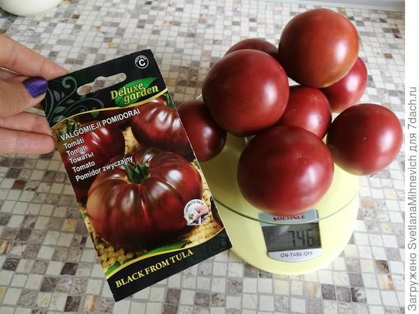 Из магазинных семян  темного томата у меня выросли вот такие плоды