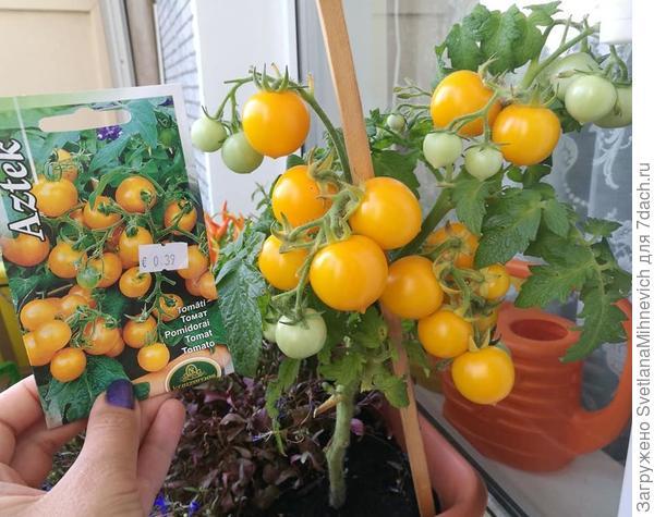 А на балконе, среди цветов, я пробовала вырастить карликовый томат. Удалось