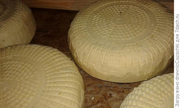 сыр зреет