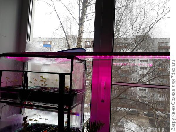 А это сама лампа линейного типа. Светит розовым светом, но если присмотреться, то виден и синий спектр. Окна выходят на север.