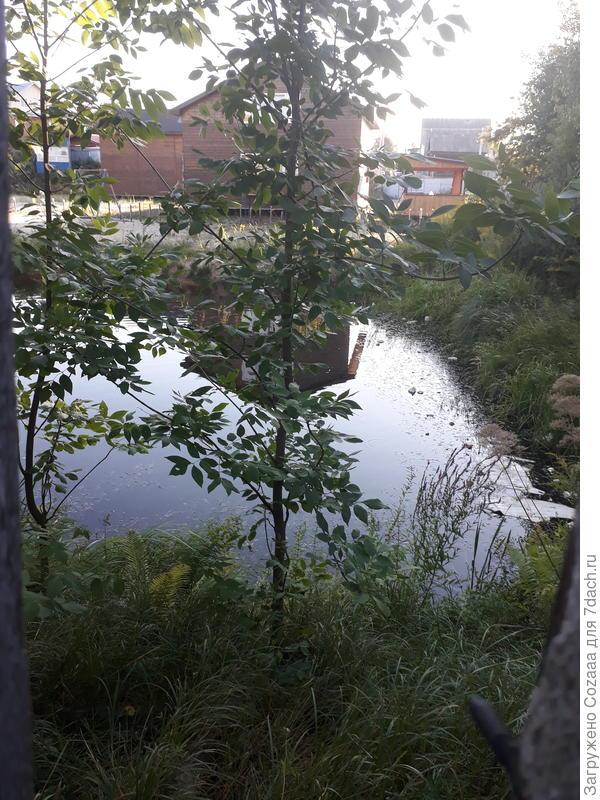 Соседское озерцо, с дикими утками.