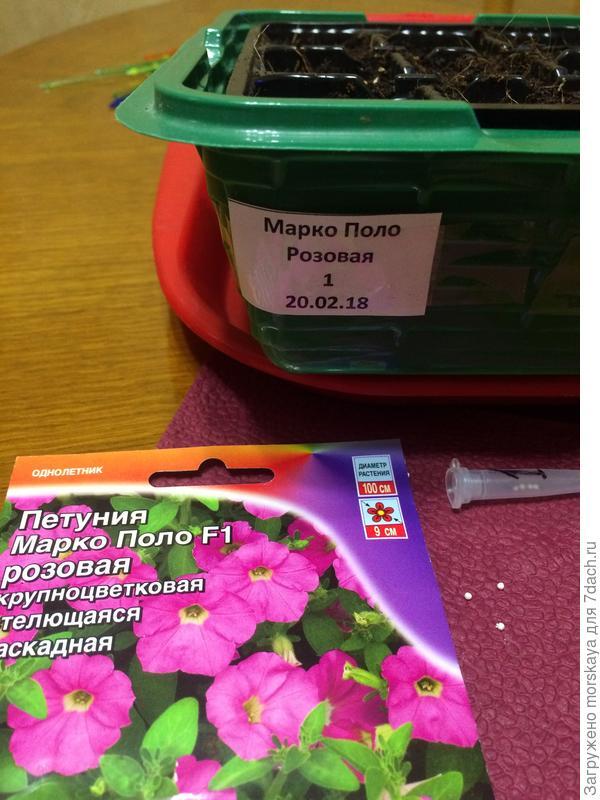 Петуния Марко Поло розовая F1. Итоги тестирования