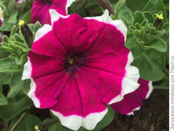отдельный цветок