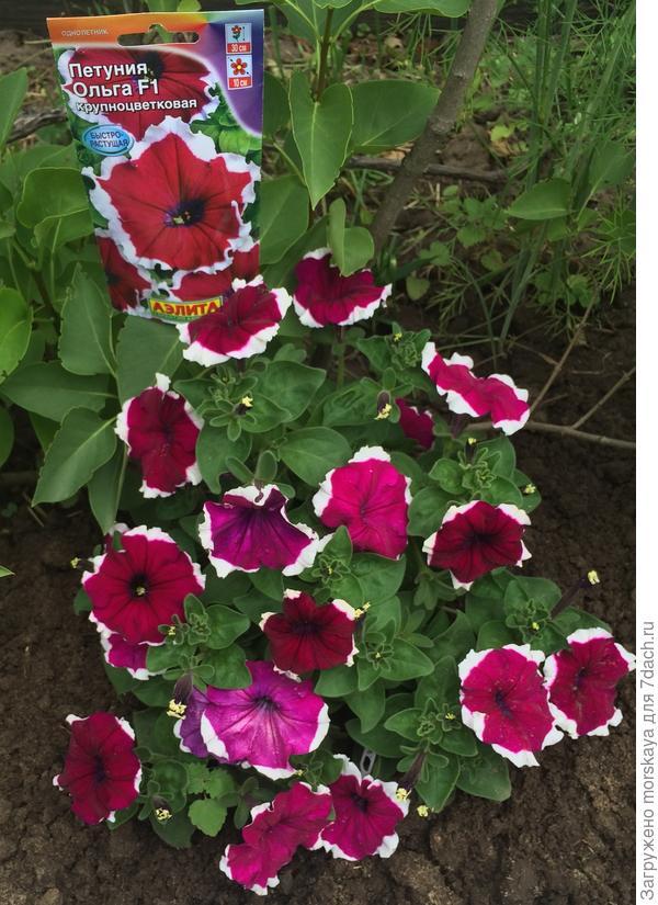 2.07 цветение