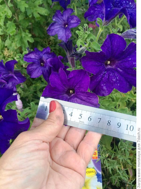 цветок 6,5 см