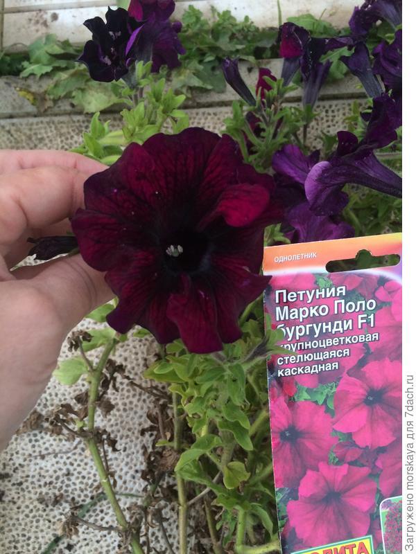 4.10 цветок