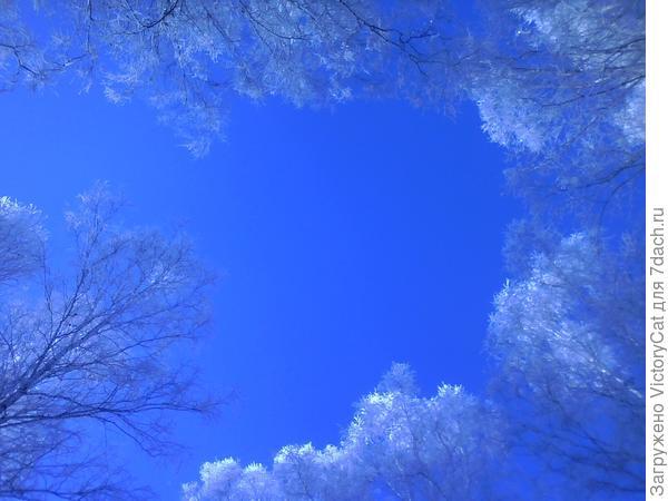 Наше Зимнее чистое небо (порадовать глаз прошлыми фото, а то нынче пасмурно :( )