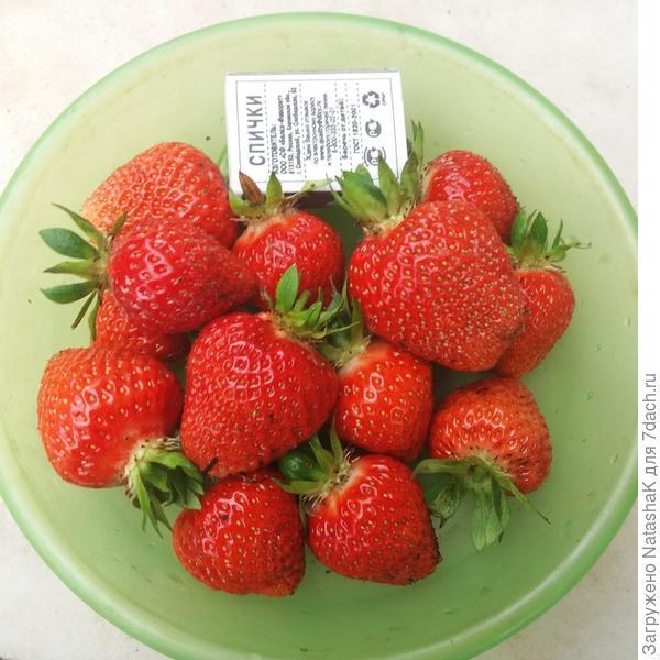 Первые ягодки, самые сладкие и ароматные