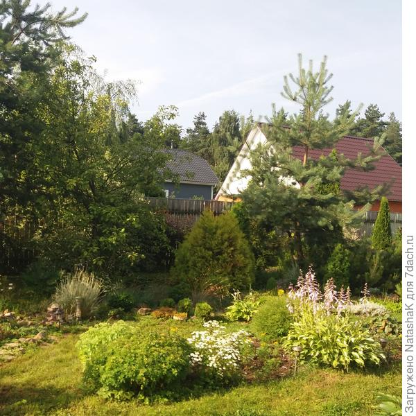 Ксочек микбордера в начале лета