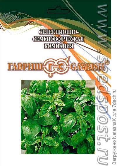 Базилик зеленый ароматный - замечателен для приправ