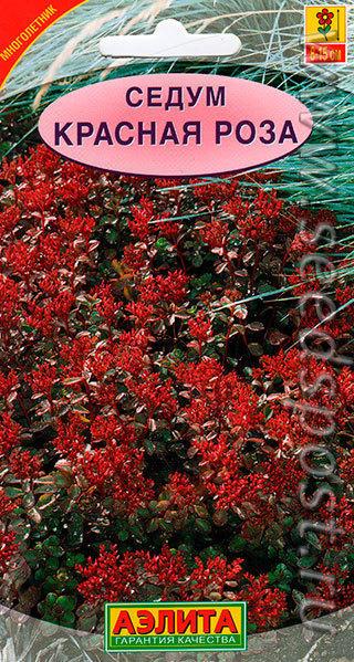 Седум Красная роза