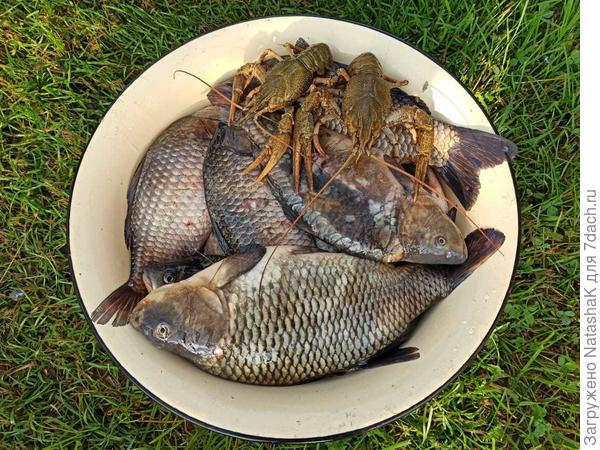 Копченые караси - нежные и ароматные - пошаговый рецепт приготовления с фото