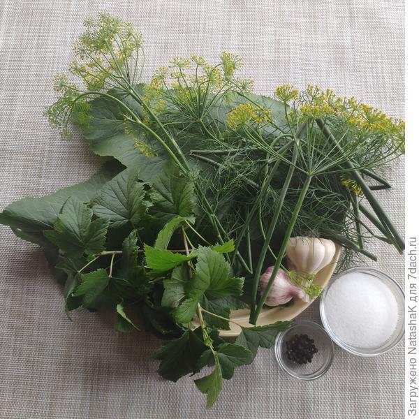 Урожай из парника АгроЩит. Отзыв о развитии растений в парнике. Рецепт малосольных огурцов. Фото