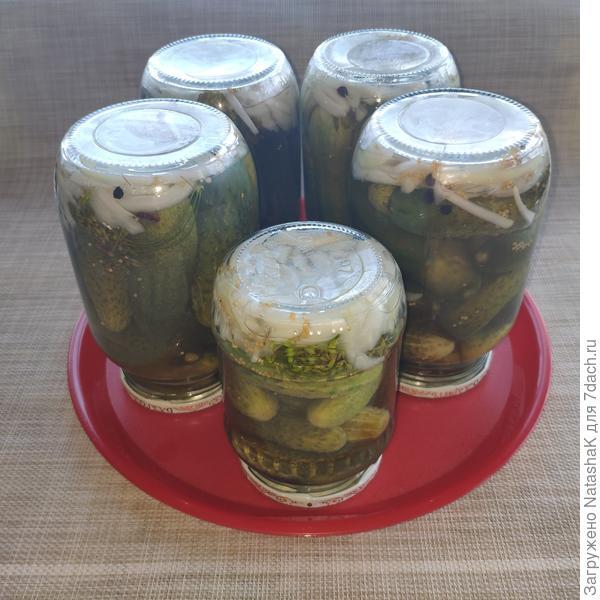 Маринованные огурчики из парника «АгроЩит». Рецепт с фото