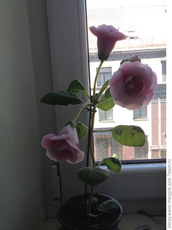 Вот этот цветок!?