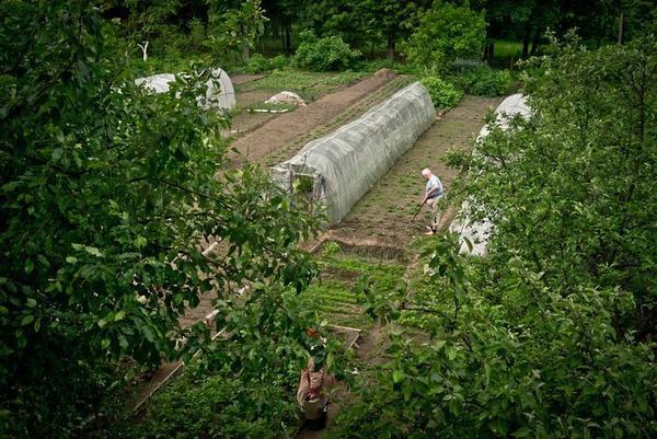 Огороды есть даже при местной школе и детском садике. Разумеется, все школьники летом отрабатывают определённое количество трудодней.