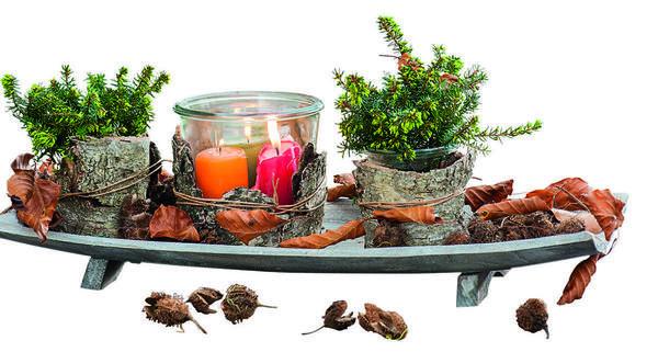 Зажженные свечи в стеклянной емкости стильно подсвечивают два кустика эрики румяной (Erica carnea). Совет: декорируйте горшки с растениями кусочками коры, поставьте на поднос и украсьте композицию листьями и плодами бука.