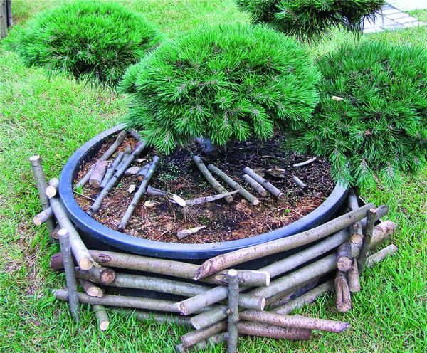 Декор для пластикового контейнера можно соорудить из средних по толщине веток дерева.