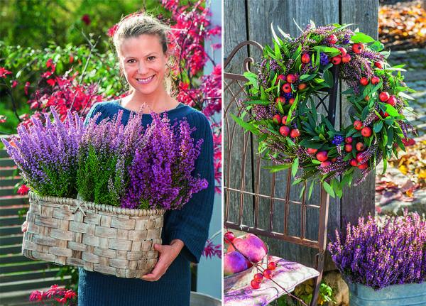 Вереск идеально сочетается с филигранным ковылем и фиалками с бордовыми цветками.