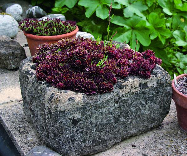 Растительная композиция:  мхи в камне - лаконично, но чрезвычайно декоративно.