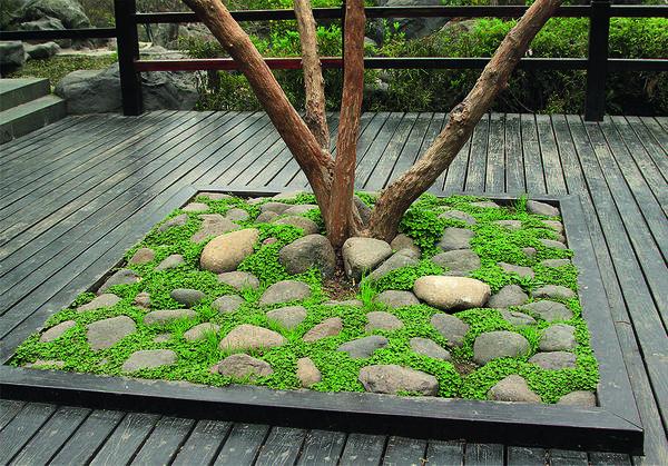 Эта минималистичная каменная композиция сделает сад стильным и изысканным.