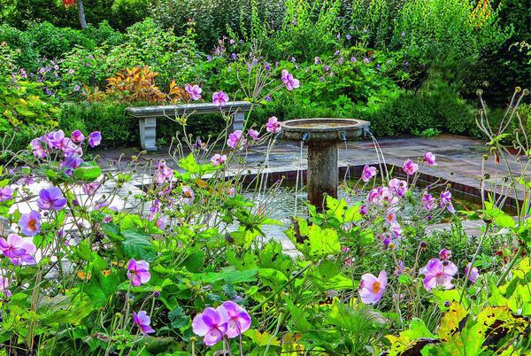 За цветущими анемонами виднеется каменная скамья с изящно вырезанными ножками. Ее органично дополняет фонтан с водоемом, также сделанные из камня.