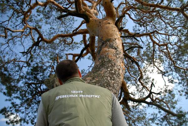 Паспортизация дерева