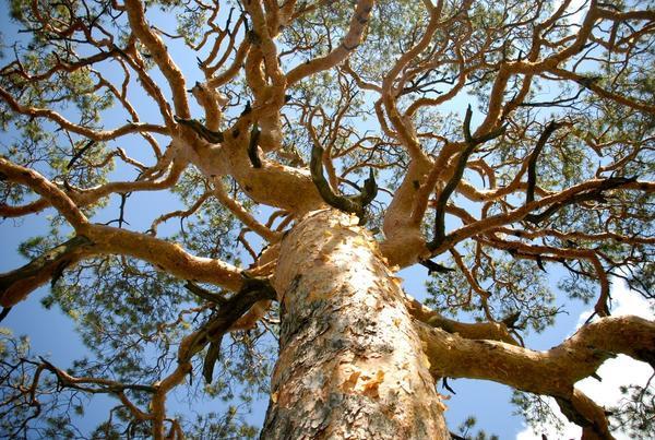 Дерево - символ жизни, мира, бессмертия и познания