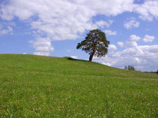 Дерево жизни...