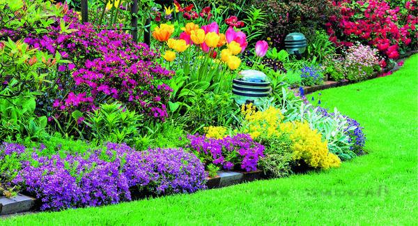 Начиная с ранней весны цветы-солисты в миксбордере будут сменять друг друга.