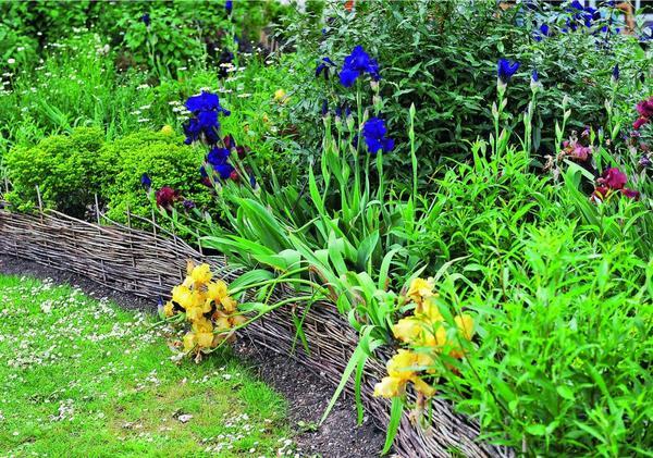 Плетеный бордюр - один из самых бюджетных вариантов обрамления цветника. Сплести его можно самостоятельно из свежесрезанных ивовых прутьев.