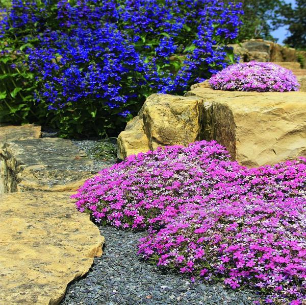 Большие валуны отлично декорируют многоуровневый участок. А в нишах среди камней можно высадить цветущие многолетники.