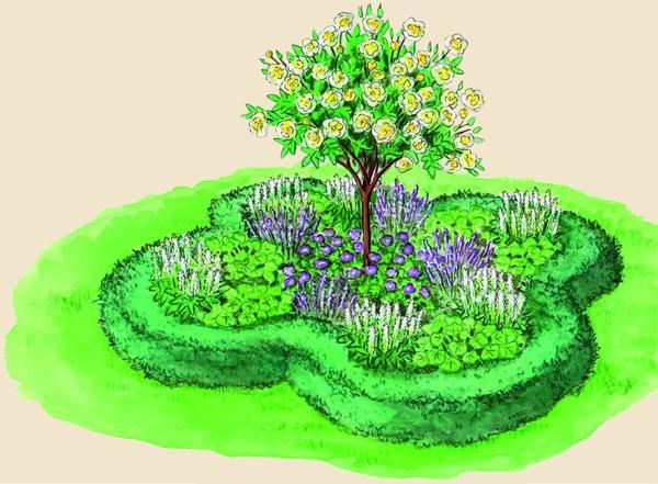 Ароматная идея для сада