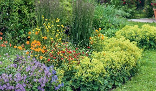 Манжетка с красивыми листьями и желто-зелеными соцветиями великолепно себя чувствует практически в любой зоне сада. Компактностью отличается манжетка сверху-голая (Alchemilla epipsila)