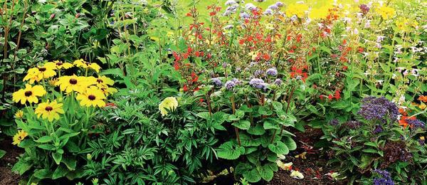 Любоваться цветением теплолюбивых агератумов, бархатцев, петуний, георгин, бальзаминов, портулака или еще более редкой титонии можно все лето.