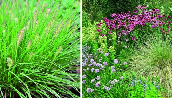 Добавьте в злаковую компанию близкие по агротехнике растения