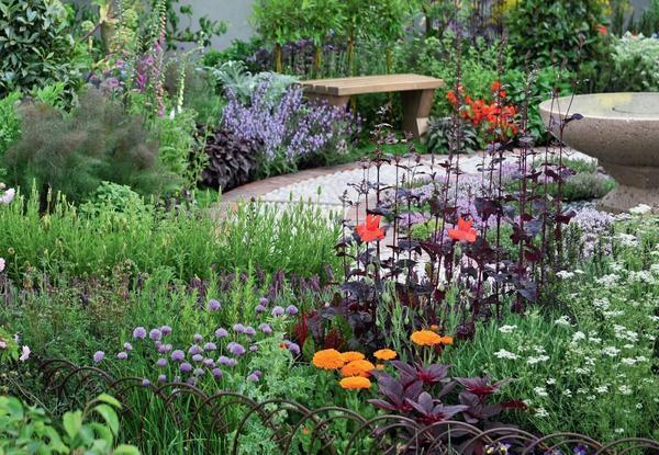 Стильный уголок пряных трав и Ко: кервель, лебеда садовая (пурпурная форма), мак, фенхель, лаванда, шнитт-лук и тимьян.
