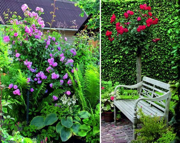 Штамбовая роза - симпатичная соседка для изящной лавочки.