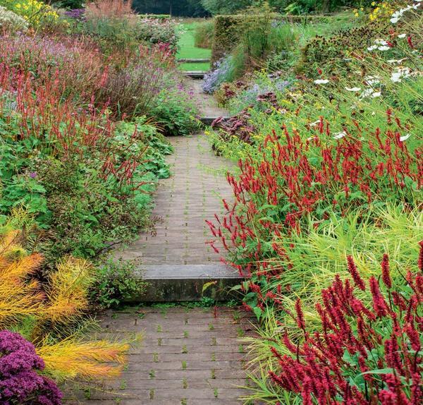 Вдоль дорожек придутся ко двору горцы компактных сортов, например Blackfield (на переднем плане) и Anne s Choice (вдали). В идеале их стоит дополнить осокой пальмолистной (Carex muskingumensis).