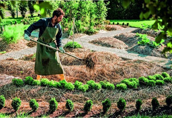 Под одеялом из соломы почва дышит, становится рыхлой, ей не нужен частый полив, даже если лето выдалось засушливым.