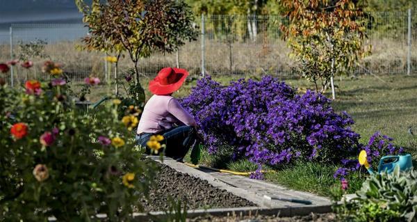 Начинают работы по подготовке растений к зиме задолго до наступления морозов.