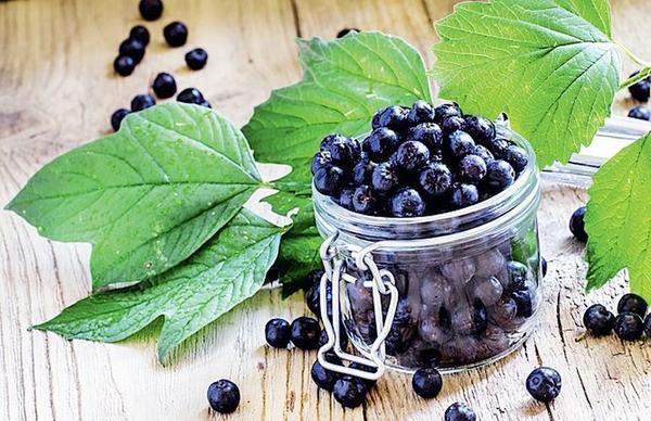 Черноплодная рябина поможет похудеть