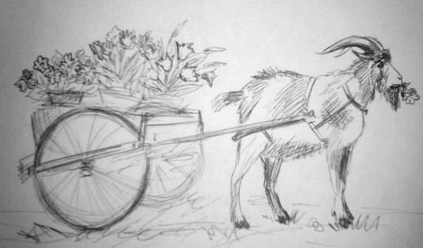 Козел везет петунии и другие цветы дачникам на 7dach.ru. Рисунок Екатерины Петровой