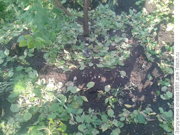 опавшие зеленые листья