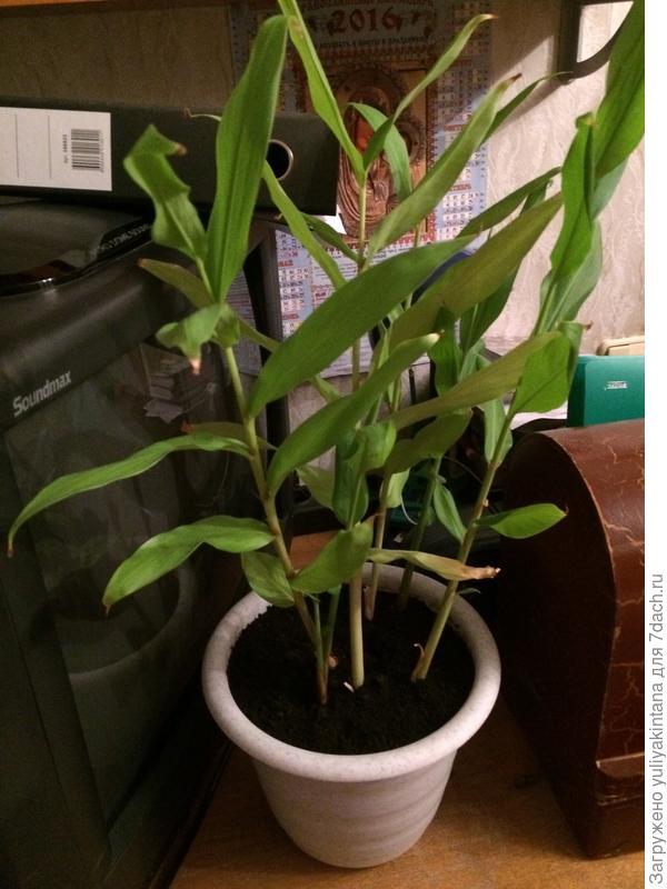 Как называется растения?