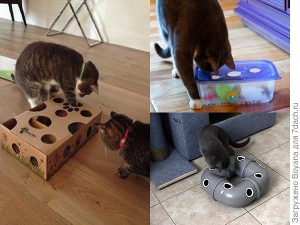 Интерактивная игра для кошек. Фото с сайта https://ru.pinterest.com/