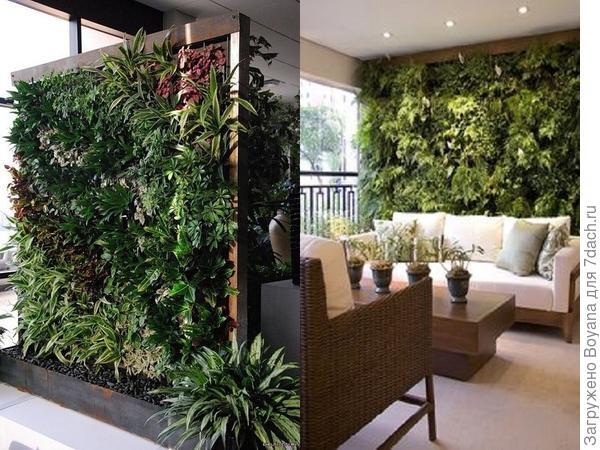 Живая стена из комнатных растений. Фото с сайта ru.pinterest.com