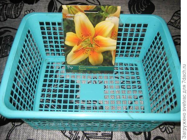 Вот в такие посадила тюльпаны и лилии в этом году